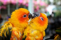 birds | Download 10 Adorable and Cute Love Birds Wallpapers