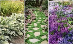 Szegélynövények Garden Paths, Stepping Stones, Planting Flowers, Outdoor Decor, Plants, Home Decor, Lawn And Garden, Stair Risers, Decoration Home