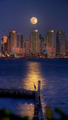 Blue Heron Moon.. San Diego Bay, California (by Peter Tellone)