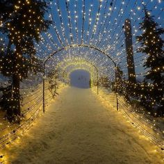 Reasons to Start Planning Your Alberta Winter Vacation The Light Walk at Grouse Mountain, Vancouver, BC Oh The Places You'll Go, Places To Travel, Places To Visit, Sunshine Coast, December, Victoria, Canada Travel, British Columbia, Travel Inspiration