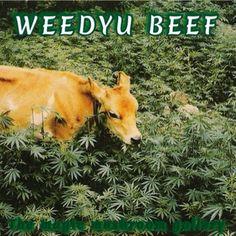 Wagyu beef 420 best steak ever high society