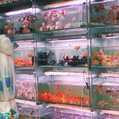 ✨PrincessChelRB✨ Aesthetic Photo, Aesthetic Pictures, Water Aesthetic, Aesthetic Themes, Images Esthétiques, New Wall, Looks Cool, Vaporwave, Goldfish