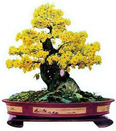 Bonsai plant in bloom
