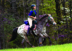 Appaloosa Horse Club (breedofchoice) on Pinterest