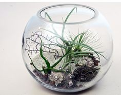 Air Plant Terrarium with sea fan - shells - sea urchin. - I like the random fun objects Air Plants, Indoor Plants, Air Plant Terrarium, Terrariums, Air Plant Display, Flora, Succulents, Shells, Sea Urchin