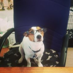 We're beginning to notice more & more familiar faces returning to the shop - it's lovely to know we have satisfied customers! If you haven't visited already, we are open until 4.30pm today. Oscar would love to meet you