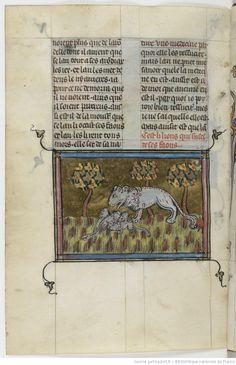 Isopet II de Paris, [traduction anonyme du Novus Aesopus d'Alexandre Neckam] ; Richard de Fournival, Bestiaire d'Amours 1201-60? enlumineur Richard de Montbaston 1330-50