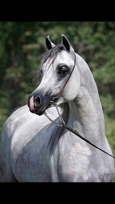 Gorgeous - love dapple grays