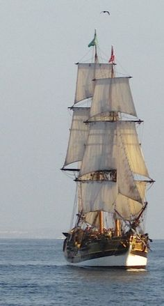 An 18th-Century Sailing Ship. The Lady Washington - once was able to participate in a 'cannon battle' on board this beautiful ship... THAT was a great day!!!