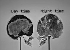 The Curious Brain Day Time vs. Night Time
