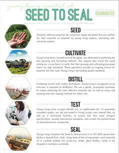 Young Living's Seed to Seal Guarantee, from the team at Lavender and Lime.