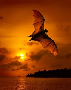 Beautiful bat....writing prompt?