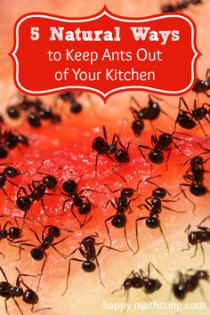 1000 Images About Homesteading Pest Control On Pinterest Ants Ticks And How To Get Rid