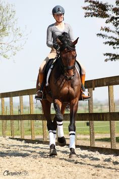 Dressage Horses for sale                                                       …