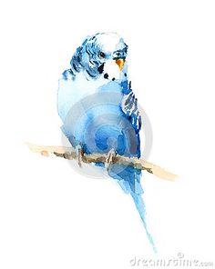 Illustration exotique d oiseau de perruche d aquarelle bleue de perruche tirée par la main