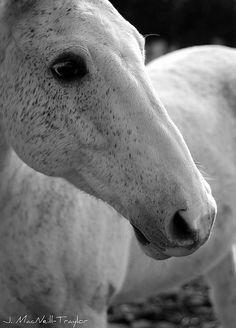 :) I love horses!