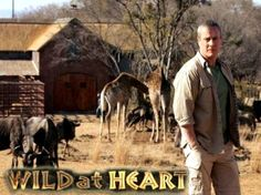 Wild At Heart is one of the only UK shows I watch week in week out. I actually haven't seen any other season. I need to catch up! List Of Tv Shows, Me Tv, Love Movie, Leopards, Wild Hearts, Some Pictures, Safari, Movies, Den