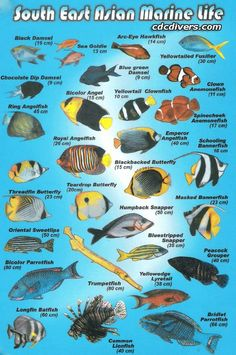 Tropical Saltwater Fish Chart