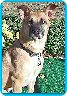 Act quickly to adopt . Pets at this Shelter may be held for only a short time. Marietta, GA - German Shepherd Dog Mix. Meet BAKER a Dog for Adoption.