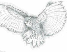 Owl Drawings In Pencil Owl drawings Fly Drawing, Drawing Eyes, Drawing Sketches, Painting & Drawing, Greek Drawing, Drawing Birds, Pencil Painting, Owl Tattoo Drawings, Animal Drawings