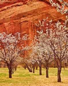 Holt's Orchard, Fruita, Utah - in Capitol Reef National Park - settled by Mormon farmers in 1878