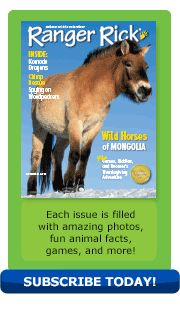 November 2013 issue of Ranger Rick - featuring an article about Takhis (wild horses of Mongolia)
