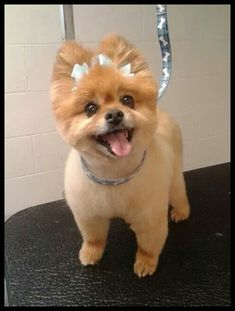What You Need For a Portable Dog Grooming Business | Dog Grooming * More details can be found by clicking on the image. #DogAccessories
