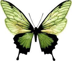 Watercolor Paintings Of Animals, Watercolor Print, Beautiful Bugs, Beautiful Butterflies, Wings Sketch, Animal Print Shop, Petit Tattoo, Butterfly Drawing, Art Corner
