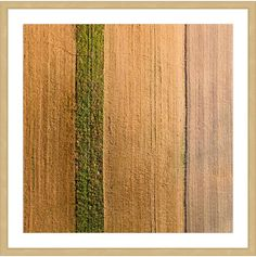 Marmont Hill Seeded Land (Framed Print)