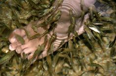 beaches and fish nail disigns | 159321-eaten-alive-by-fish---fish-spa-singapore-not-my-foot-btw ...