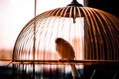 Çocuklu aileler için uygun kuş seçimi Canario, Ceiling Lights, Lighting, Pendant, Home Decor, Parakeet, Pets, Tips, Decoration Home