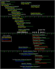 Timeline of Evolutionary Thought Darwin Evolution, Human Evolution, Alfred Wegener, Biology Test, Carl Linnaeus, Anthropology, Genetics, Science And Technology, Timeline