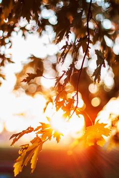 Mystical - heaven-ly-mind: Arise, fair sun, and kill the. Black Background Images, Photo Background Images, Background For Photography, Photo Backgrounds, Fall Pictures, Nature Pictures, Autumn Photography, Landscape Photography, Iphone Wallpaper Fall