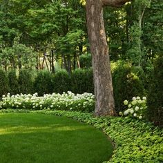 Green & White Landscaping Design Ideas, Pictures, Remodel, and Decor