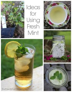 """Mint sugar and Mint tea recipes along with others! """"Got mint in your garden? Some great ideas from The Nerdy Farm Wife for putting it to good use, in everything from tea to sugar to bath salts to vinegar. Peppermint Plants, Peppermint Tea, Fresh Mint, The Fresh, Herbal Remedies, Natural Remedies, Edible Flowers, Natural Living, Gardens"""