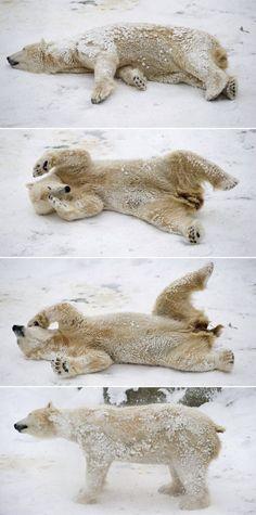 Urso polar se diverte na neve em zoológico de Berlim.