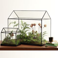 awesome home terranium at West Elm