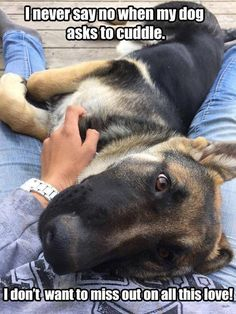 The German Shepherd http://pawsforpets.tumblr.com/post/99769410375/mountainstooceans-how-much-do-i-love-her