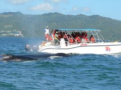 Humpback whales in Samana, Dominican Republic