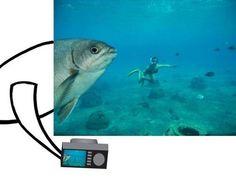 É: Peixes também tiram fotos para o Facebook!
