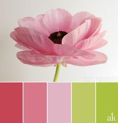 a ranunculus-inspired color palette // pink, spring green