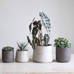 Are you interested in our Plant pot ? With our stone plant pot you need look no further.