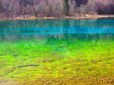Nature's Colorful Wonders | Five Flower Lake, Jiuzhaigou...