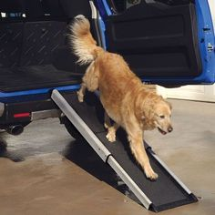 Can't lift your dog?  Try a Smart Ramp for dogs of all ages and sizes  #dogramp