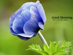Good Morning - Beutiful Flower Image-wg16150
