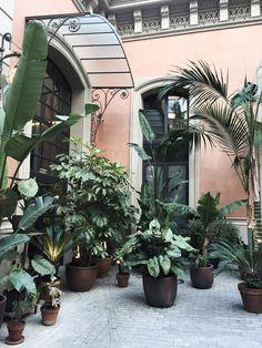 Plants at El Nacional in Barcelona Spain