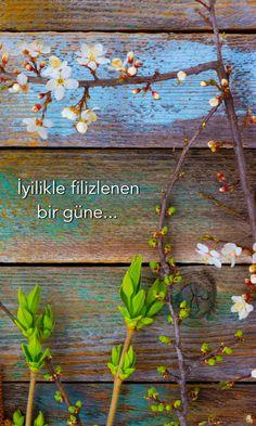 İyilikle filizlenen günler dileğiyle.. iyi sabahlar olsun..  #iyilik #umut