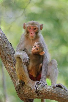 always fascinate me Primates, Mammals, Bird Pictures, Animal Pictures, Beautiful Creatures, Animals Beautiful, Indian Monkey, Baby Animals, Cute Animals