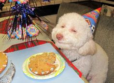 I told you it was my birthday!