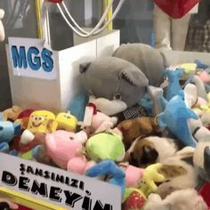 Cat hides in claw game machine